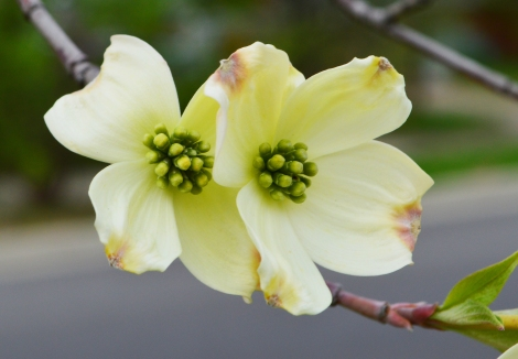 041314_Dogwoods PHOTO3